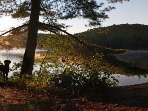 Campers Adirondack